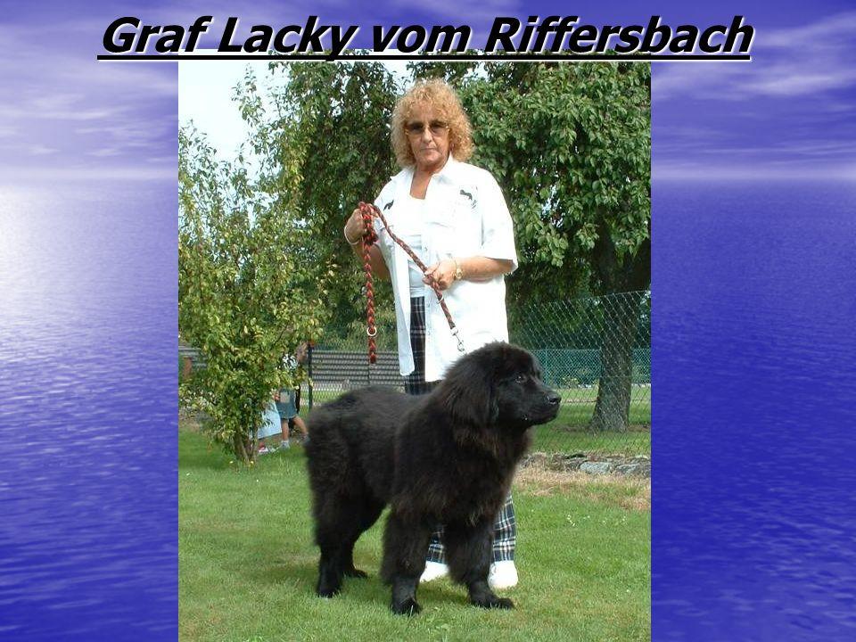 Graf Lacky vom Riffersbach Graf Lacky vom Riffersbach