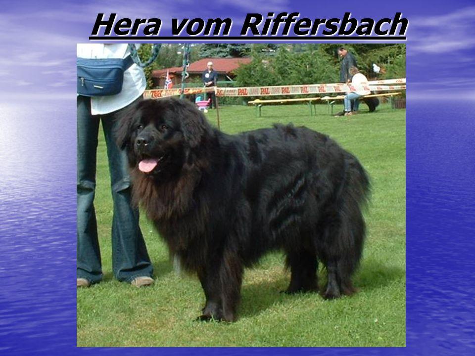 Hera vom Riffersbach