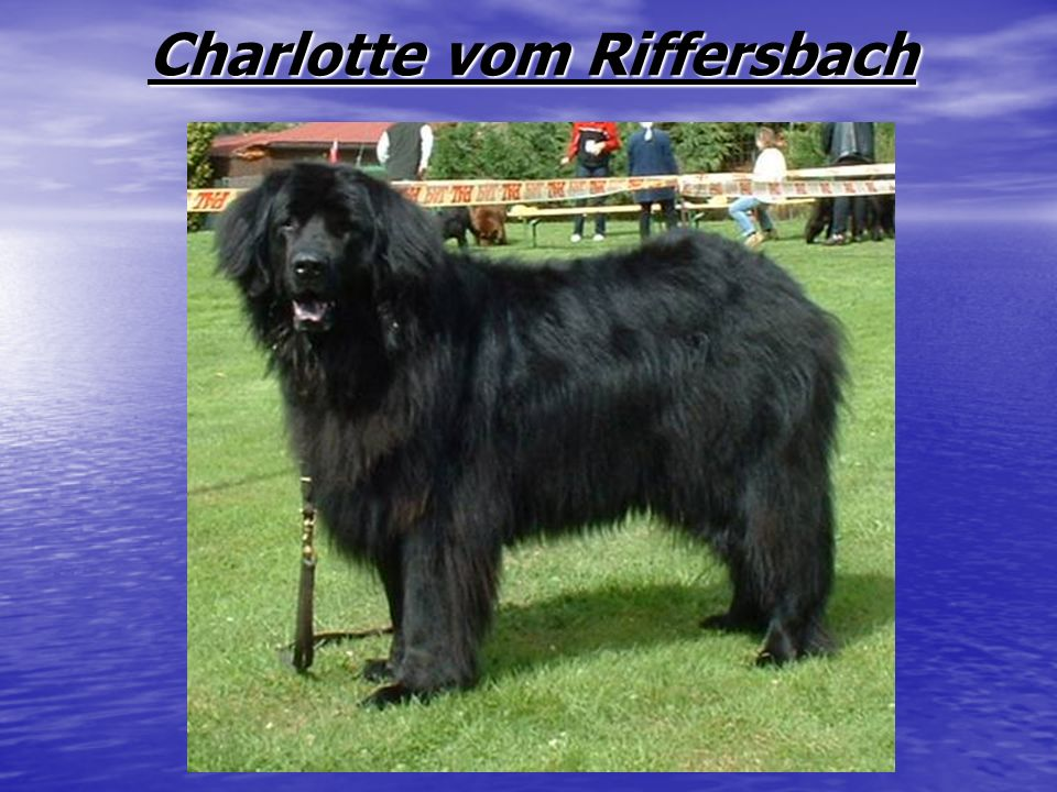 Charlotte vom Riffersbach Charlotte vom Riffersbach