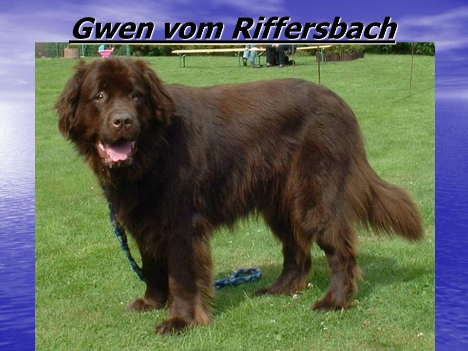 Gwen vom Riffersbach