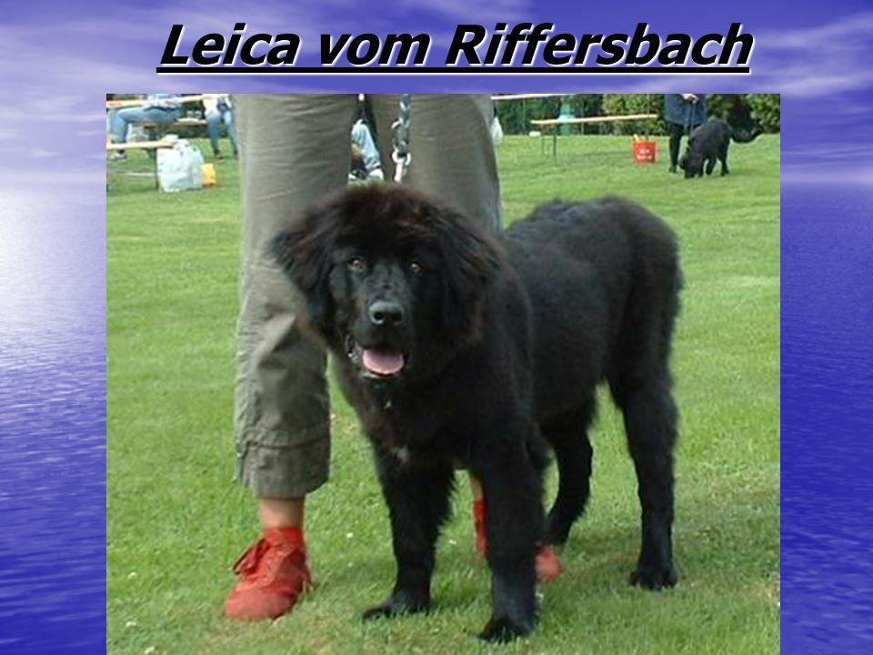 Leica vom Riffersbach Leica vom Riffersbach