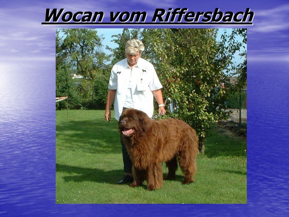 Wocan vom Riffersbach Wocan vom Riffersbach