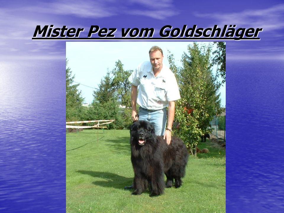 Mister Pez vom Goldschläger Mister Pez vom Goldschläger