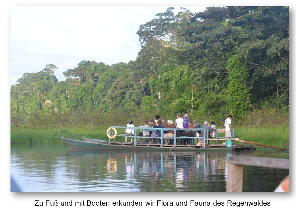 Zu Fuß und mit Booten erkunden wir Flora und Fauna des Regenwaldes