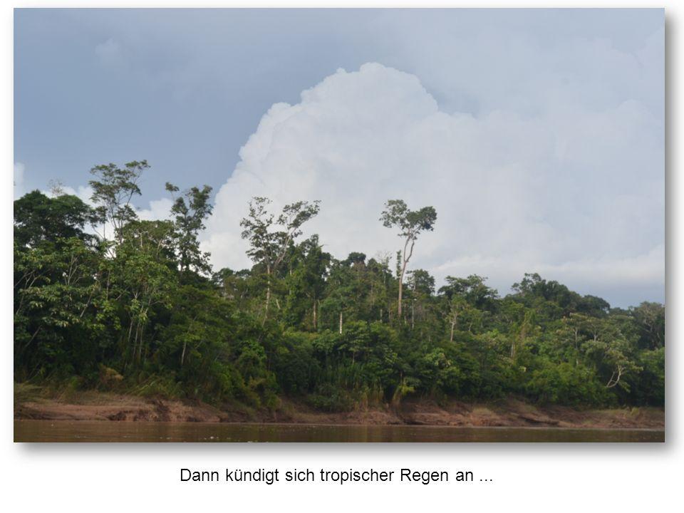 Dann kündigt sich tropischer Regen an...