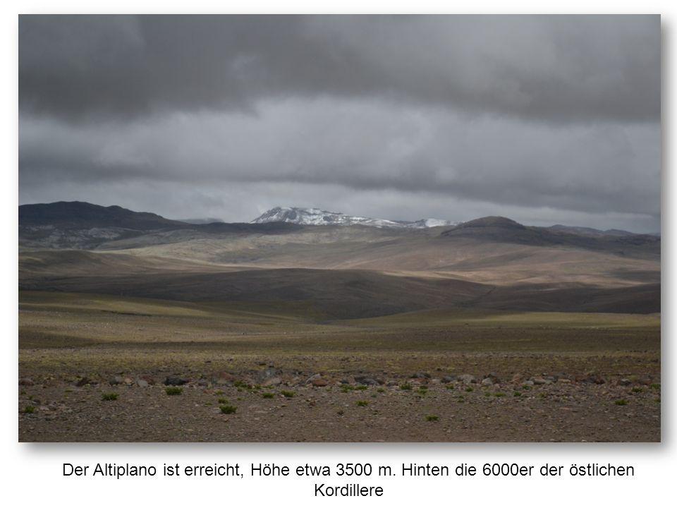 Der Altiplano ist erreicht, Höhe etwa 3500 m. Hinten die 6000er der östlichen Kordillere