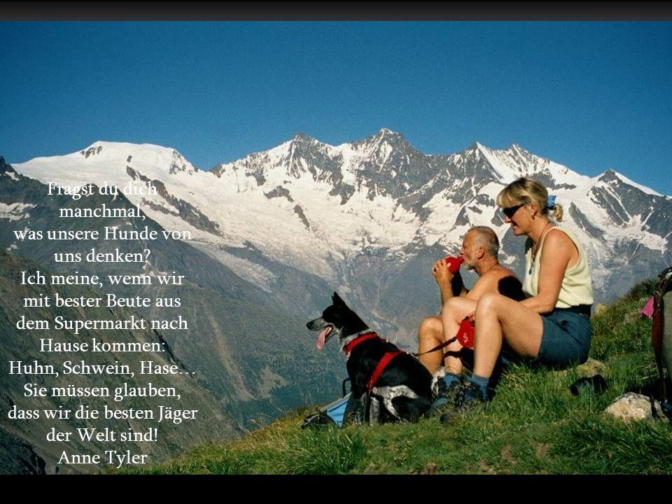 Was wäre ein neuer Tag, ohne kühle Seidennase und zwei treuen, glücklichen Hundeaugen? Ein Tag auf der Suche nach Glück. Angelika Sandmeier