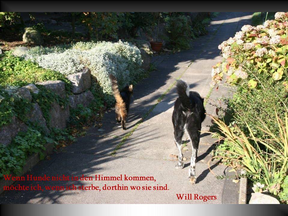 Wir schenken unseren Hunden ein klein wenig Liebe und Zeit. Dafür schenken sie uns restlos alles, was sie zu bieten haben. Es ist zweifellos das beste
