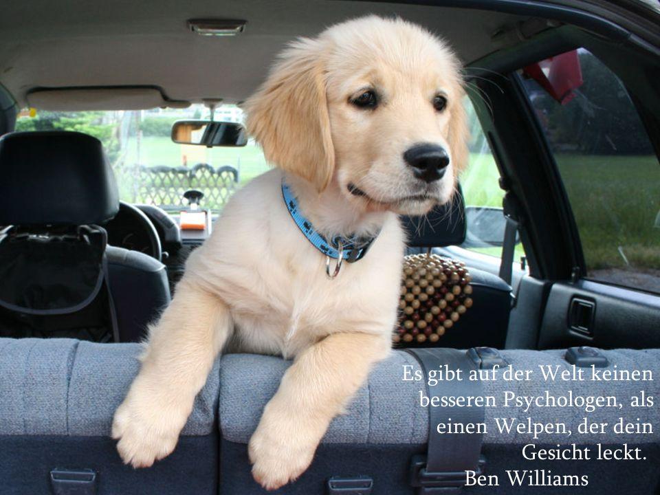 Über Hunde und Menschen Mit den besten Wünschen zu Weihnachten und für das Jahr 2010!