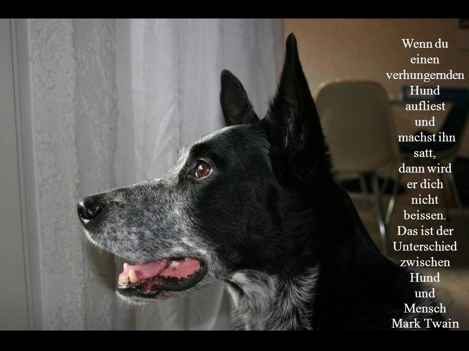 Wenn du einen verhungernden Hund aufliest und machst ihn satt, dann wird er dich nicht beissen.
