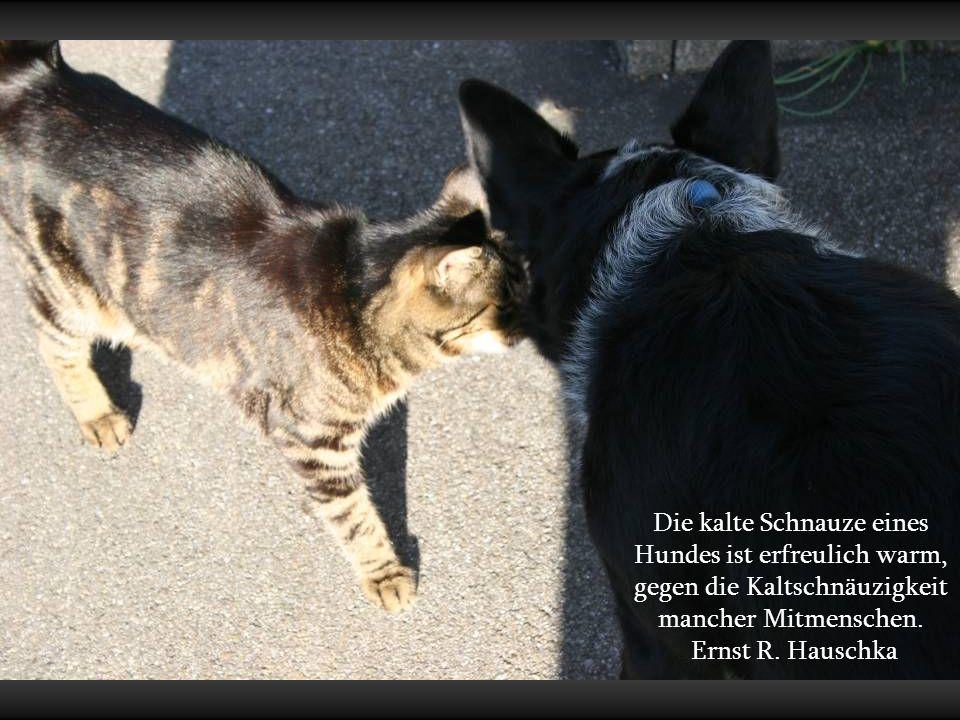 Die kalte Schnauze eines Hundes ist erfreulich warm, gegen die Kaltschnäuzigkeit mancher Mitmenschen.