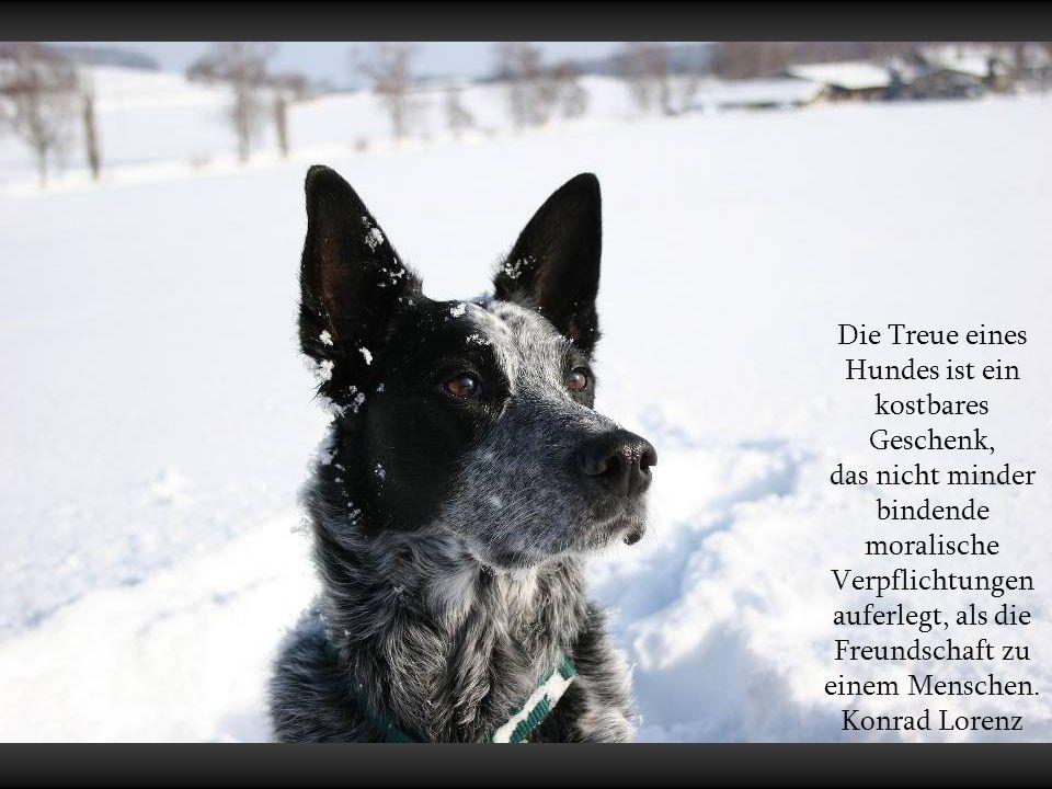 Die kalte Schnauze eines Hundes ist erfreulich warm, gegen die Kaltschnäuzigkeit mancher Mitmenschen. Ernst R. Hauschka