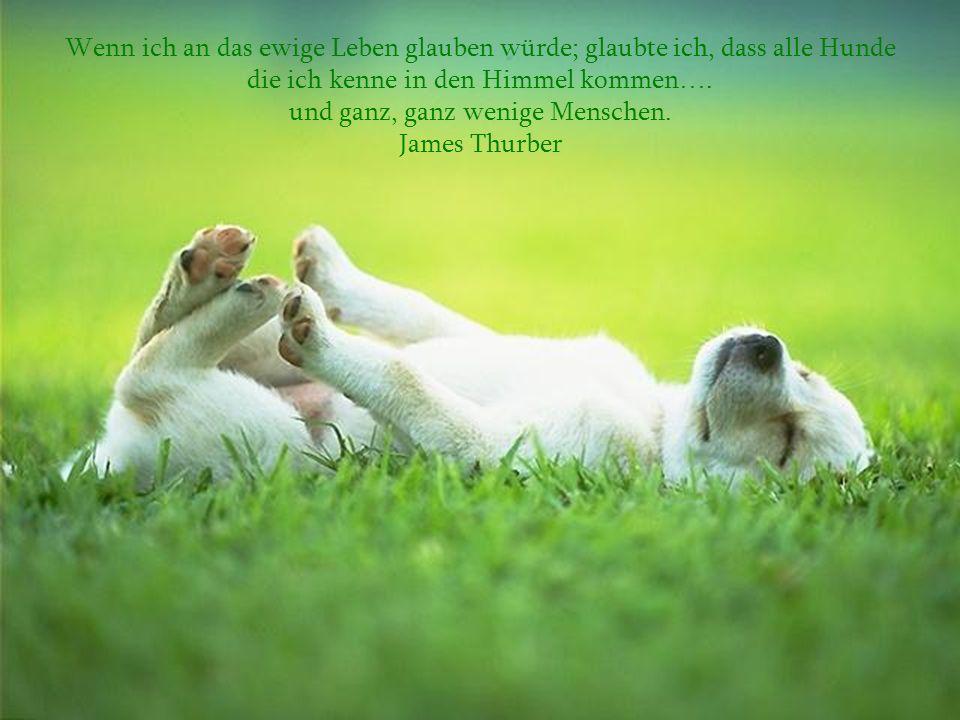 Wenn ich an das ewige Leben glauben würde; glaubte ich, dass alle Hunde die ich kenne in den Himmel kommen….