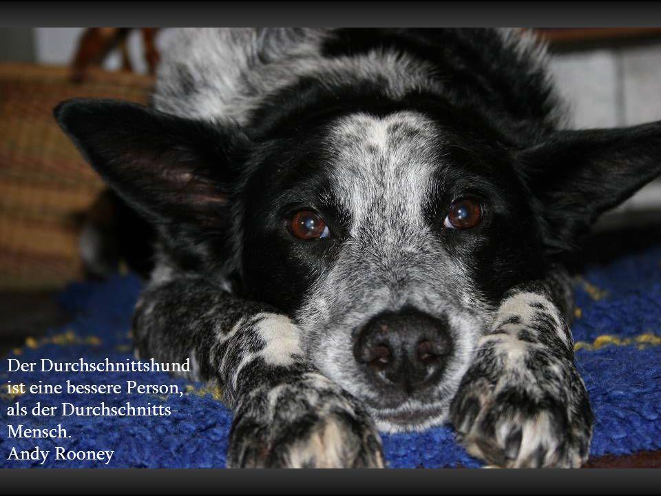 Wir schenken unseren Hunden ein klein wenig Liebe und Zeit.