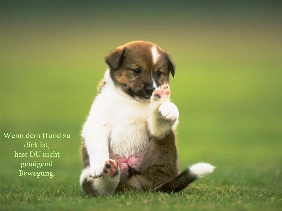 Wenn Hunde nicht in den Himmel kommen, möchte ich, wenn ich sterbe, dorthin wo sie sind.