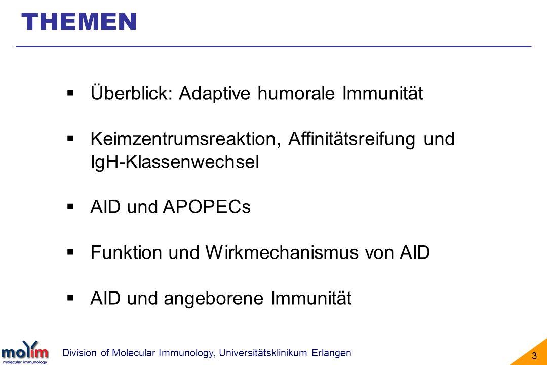 Division of Molecular Immunology, Universitätsklinikum Erlangen 3 Überblick: Adaptive humorale Immunität Keimzentrumsreaktion, Affinitätsreifung und I