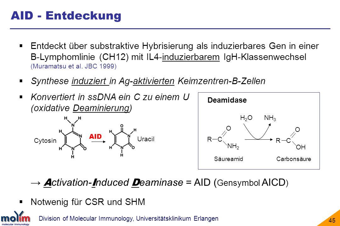 Division of Molecular Immunology, Universitätsklinikum Erlangen 45 Entdeckt über substraktive Hybrisierung als induzierbares Gen in einer B-Lymphomlin