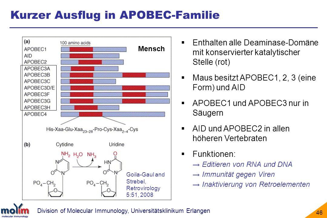 Division of Molecular Immunology, Universitätsklinikum Erlangen 46 Kurzer Ausflug in APOBEC-Familie Enthalten alle Deaminase-Domäne mit konservierter