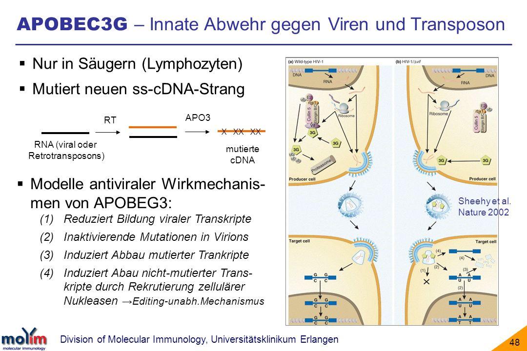 Division of Molecular Immunology, Universitätsklinikum Erlangen 48 APOBEC3G – Innate Abwehr gegen Viren und Transposon Nur in Säugern (Lymphozyten) Mu