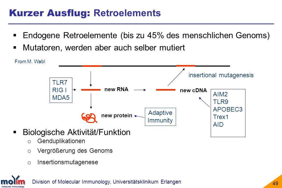 Division of Molecular Immunology, Universitätsklinikum Erlangen 49 Kurzer Ausflug: Retroelements Endogene Retroelemente (bis zu 45% des menschlichen G