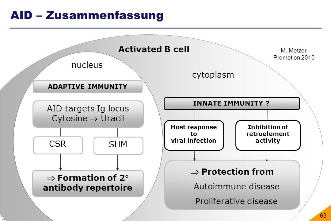 Division of Molecular Immunology, Universitätsklinikum Erlangen 63 ADAPTIVE IMMUNITY Formation of 2 antibody repertoire AID targets Ig locus Cytosine