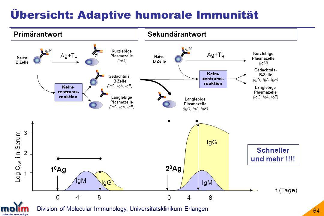 Division of Molecular Immunology, Universitätsklinikum Erlangen 64 IgG IgM Naive B-Zelle Langlebige Plasmazelle (IgG, IgA, IgE) Langlebige Plasmazelle