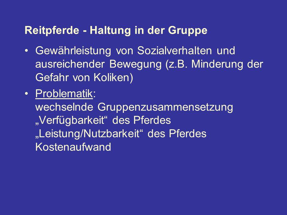 Reitpferde - Haltung in der Gruppe Gewährleistung von Sozialverhalten und ausreichender Bewegung (z.B.