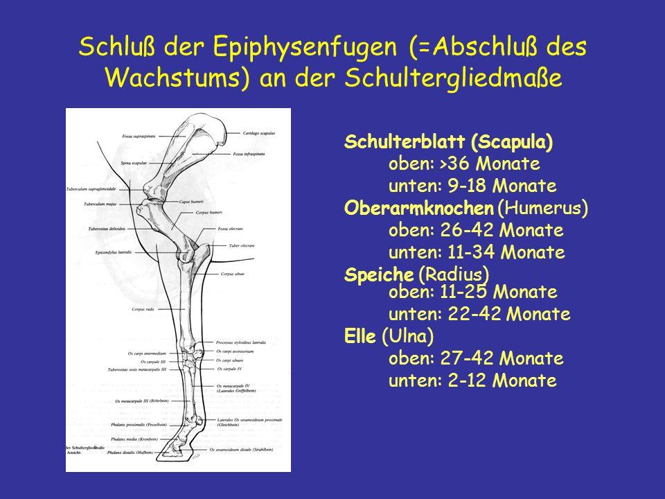 Schluß der Epiphysenfugen (=Abschluß des Wachstums) an der Schultergliedmaße Schulterblatt (Scapula) oben: >36 Monate unten: 9-18 Monate Oberarmknochen (Humerus) oben: 26-42 Monate unten: 11-34 Monate Speiche (Radius) oben: 11-25 Monate unten: 22-42 Monate Elle (Ulna) oben: 27-42 Monate unten: 2-12 Monate