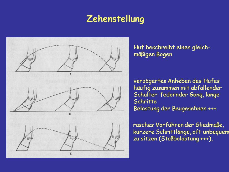 Zehenstellung Huf beschreibt einen gleich- mäßigen Bogen verzögertes Anheben des Hufes häufig zusammen mit abfallender Schulter: federnder Gang, lange Schritte Belastung der Beugesehnen +++ rasches Vorführen der Gliedmaße, kürzere Schrittlänge, oft unbequem zu sitzen (Stoßbelastung +++),