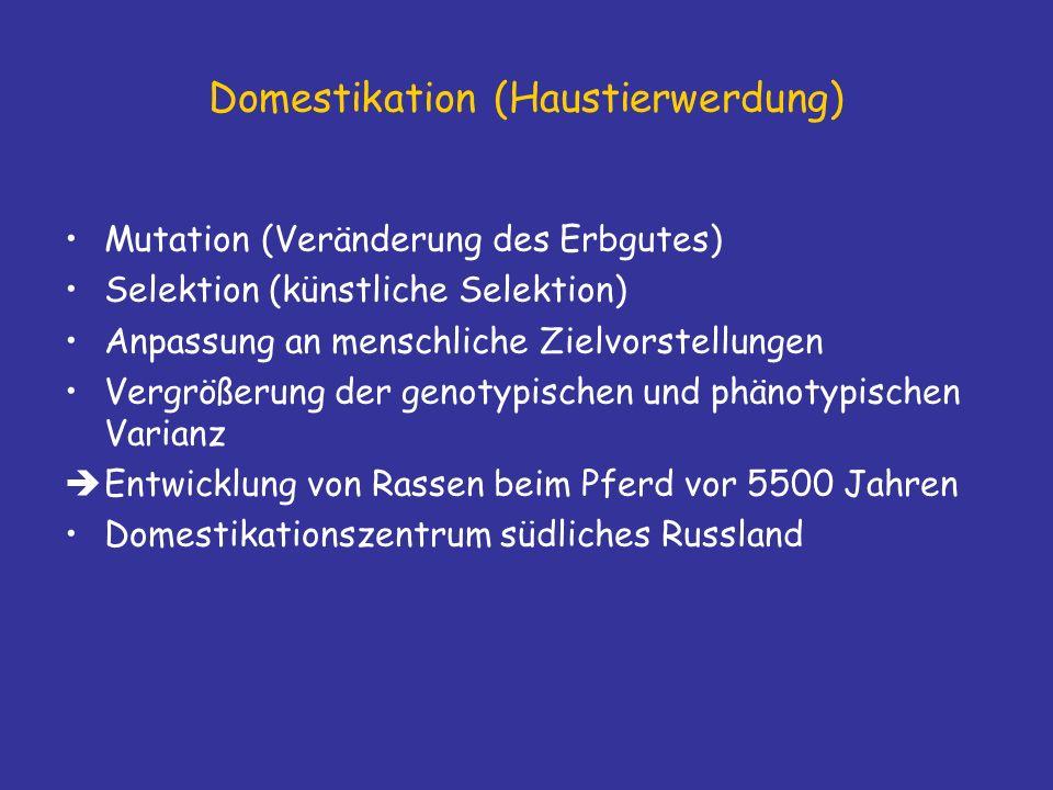 Domestikation (Haustierwerdung) Mutation (Veränderung des Erbgutes) Selektion (künstliche Selektion) Anpassung an menschliche Zielvorstellungen Vergrößerung der genotypischen und phänotypischen Varianz Entwicklung von Rassen beim Pferd vor 5500 Jahren Domestikationszentrum südliches Russland