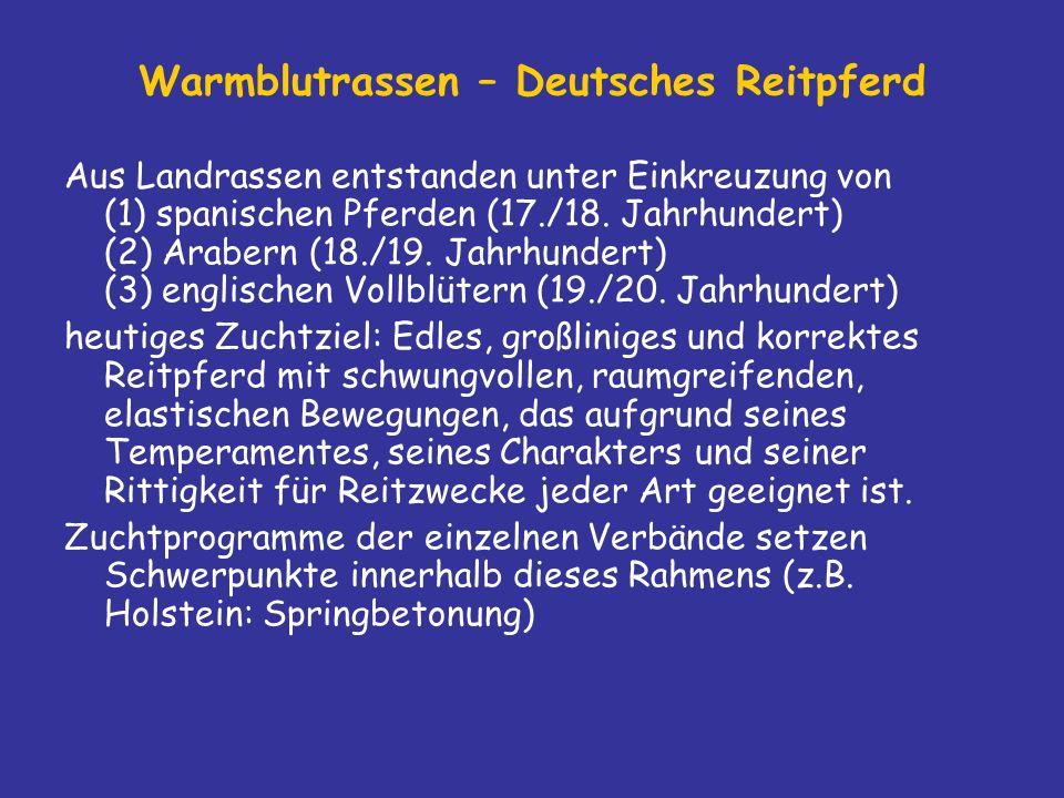 Warmblutrassen – Deutsches Reitpferd Aus Landrassen entstanden unter Einkreuzung von (1) spanischen Pferden (17./18.