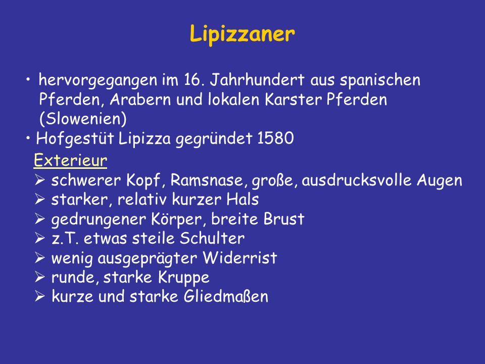 Lipizzaner hervorgegangen im 16.