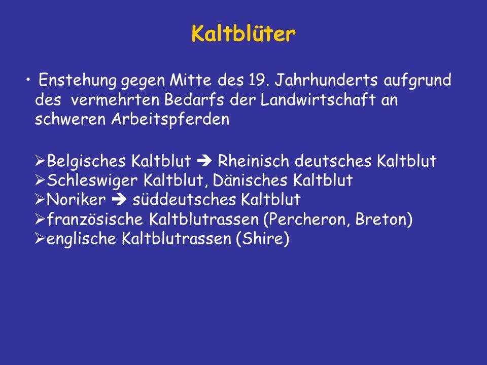 Kaltblüter Enstehung gegen Mitte des 19.