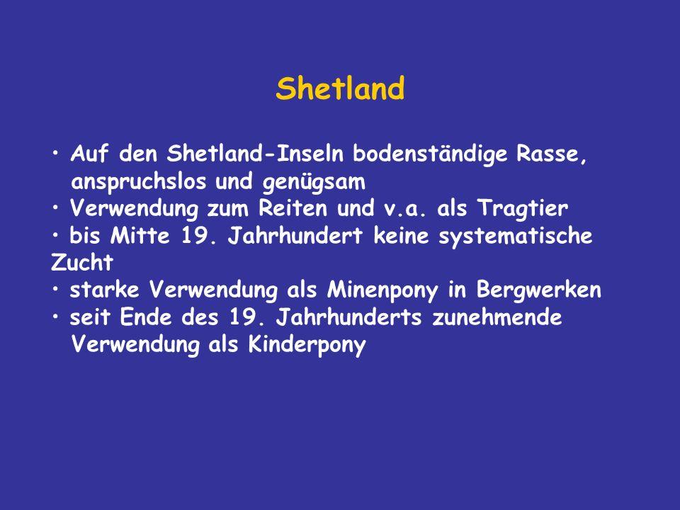 Shetland Auf den Shetland-Inseln bodenständige Rasse, anspruchslos und genügsam Verwendung zum Reiten und v.a.