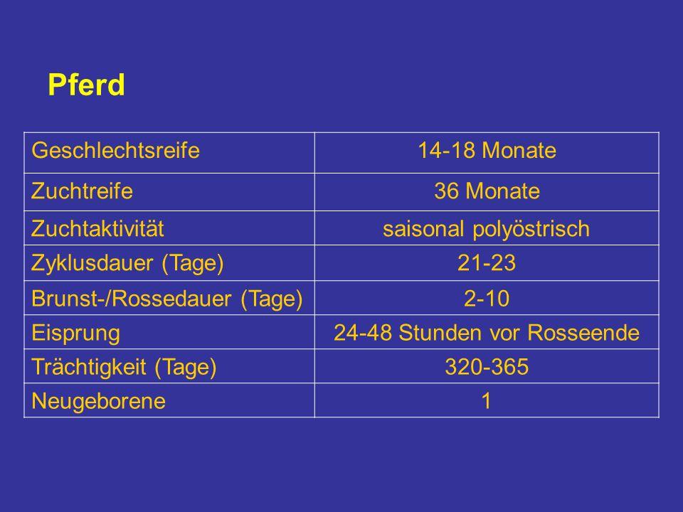 Pferd Geschlechtsreife14-18 Monate Zuchtreife36 Monate Zuchtaktivitätsaisonal polyöstrisch Zyklusdauer (Tage)21-23 Brunst-/Rossedauer (Tage)2-10 Eisprung24-48 Stunden vor Rosseende Trächtigkeit (Tage)320-365 Neugeborene1