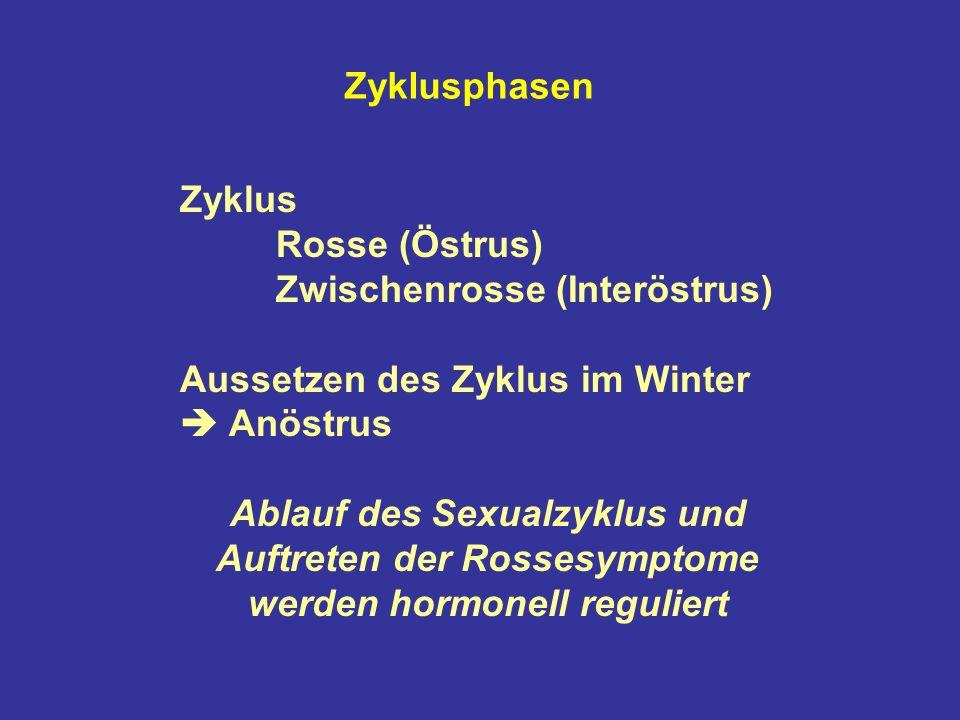 Zyklusphasen Zyklus Rosse (Östrus) Zwischenrosse (Interöstrus) Aussetzen des Zyklus im Winter Anöstrus Ablauf des Sexualzyklus und Auftreten der Rossesymptome werden hormonell reguliert