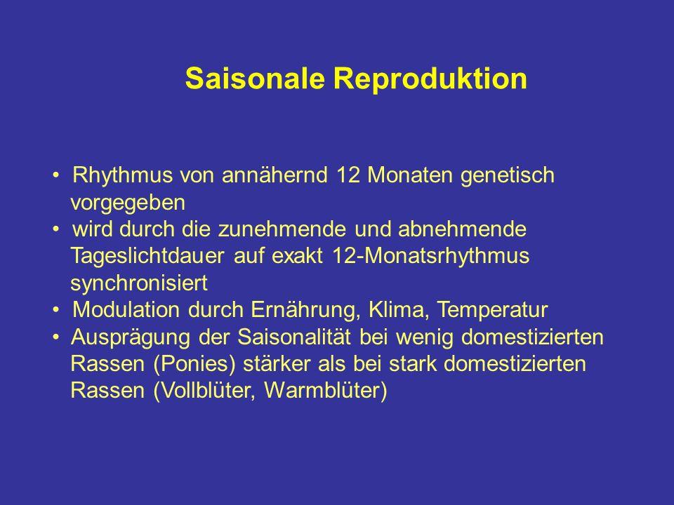 Saisonale Reproduktion Rhythmus von annähernd 12 Monaten genetisch vorgegeben wird durch die zunehmende und abnehmende Tageslichtdauer auf exakt 12-Monatsrhythmus synchronisiert Modulation durch Ernährung, Klima, Temperatur Ausprägung der Saisonalität bei wenig domestizierten Rassen (Ponies) stärker als bei stark domestizierten Rassen (Vollblüter, Warmblüter)