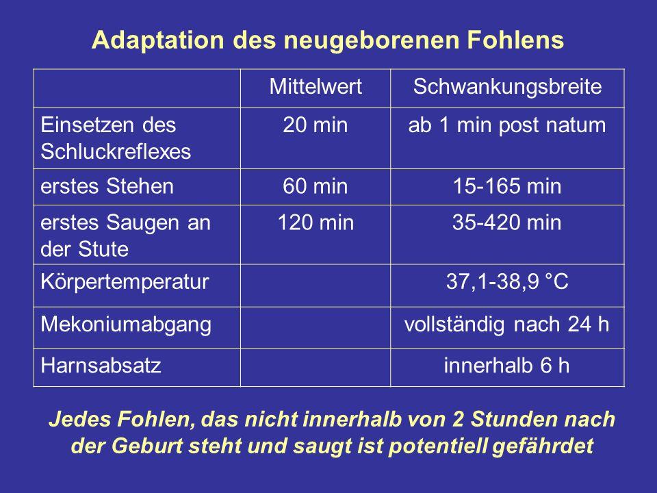 Adaptation des neugeborenen Fohlens MittelwertSchwankungsbreite Einsetzen des Schluckreflexes 20 minab 1 min post natum erstes Stehen60 min15-165 min erstes Saugen an der Stute 120 min35-420 min Körpertemperatur37,1-38,9 °C Mekoniumabgangvollständig nach 24 h Harnsabsatzinnerhalb 6 h Jedes Fohlen, das nicht innerhalb von 2 Stunden nach der Geburt steht und saugt ist potentiell gefährdet