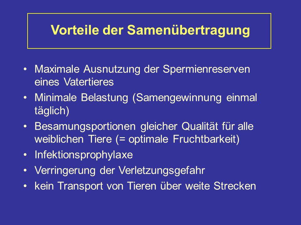 Vorteile der Samenübertragung Maximale Ausnutzung der Spermienreserven eines Vatertieres Minimale Belastung (Samengewinnung einmal täglich) Besamungsportionen gleicher Qualität für alle weiblichen Tiere (= optimale Fruchtbarkeit) Infektionsprophylaxe Verringerung der Verletzungsgefahr kein Transport von Tieren über weite Strecken