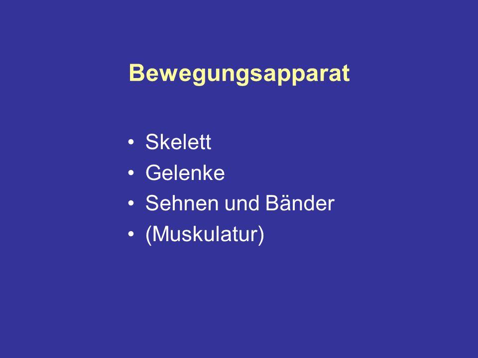 Bewegungsapparat Skelett Gelenke Sehnen und Bänder (Muskulatur)