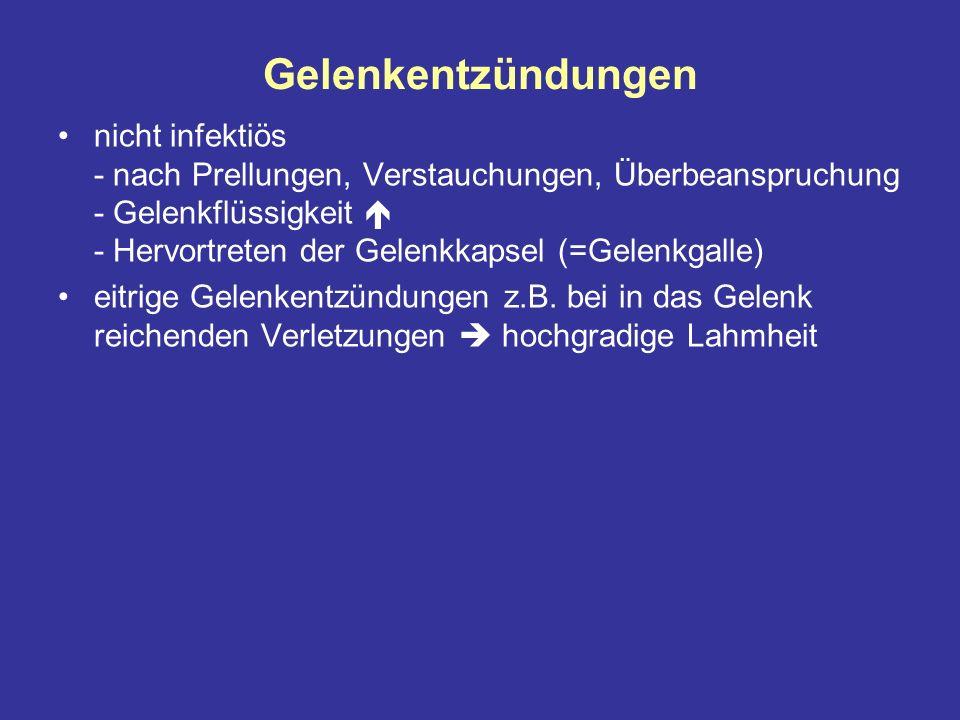 Gelenkentzündungen nicht infektiös - nach Prellungen, Verstauchungen, Überbeanspruchung - Gelenkflüssigkeit - Hervortreten der Gelenkkapsel (=Gelenkgalle) eitrige Gelenkentzündungen z.B.