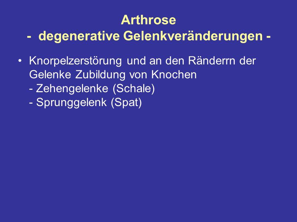 Arthrose - degenerative Gelenkveränderungen - Knorpelzerstörung und an den Ränderrn der Gelenke Zubildung von Knochen - Zehengelenke (Schale) - Sprunggelenk (Spat)