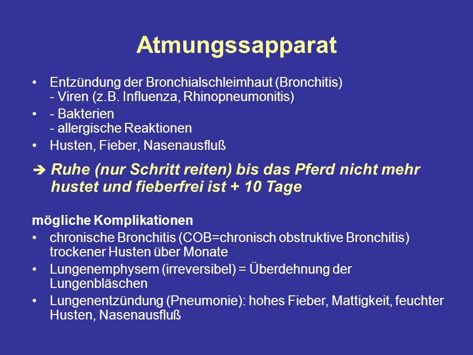 Atmungssapparat Entzündung der Bronchialschleimhaut (Bronchitis) - Viren (z.B.
