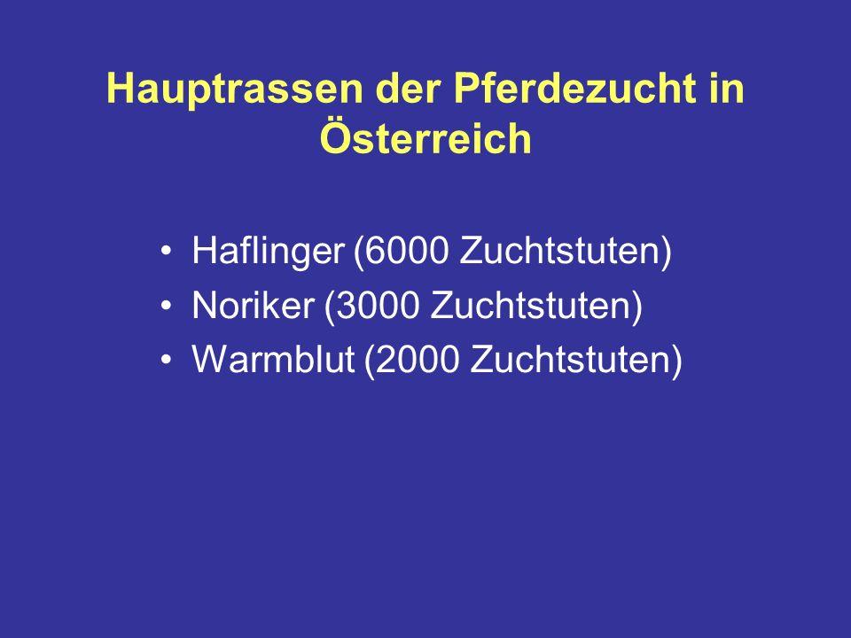 Hauptrassen der Pferdezucht in Österreich Haflinger (6000 Zuchtstuten) Noriker (3000 Zuchtstuten) Warmblut (2000 Zuchtstuten)