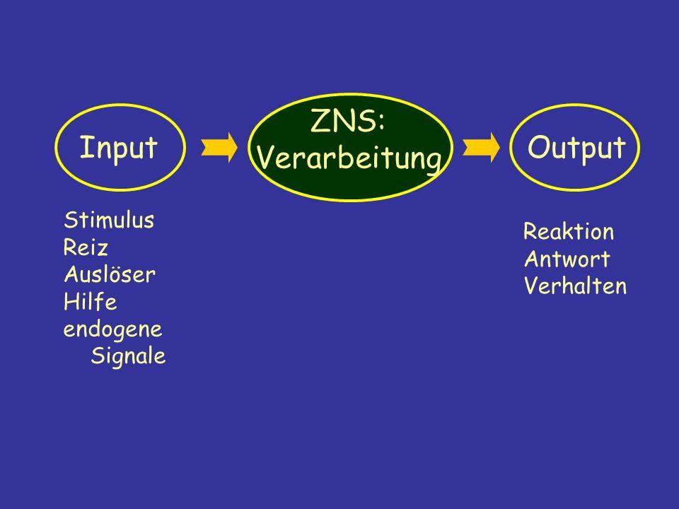 Input ZNS: Verarbeitung Output Stimulus Reiz Auslöser Hilfe endogene Signale Reaktion Antwort Verhalten