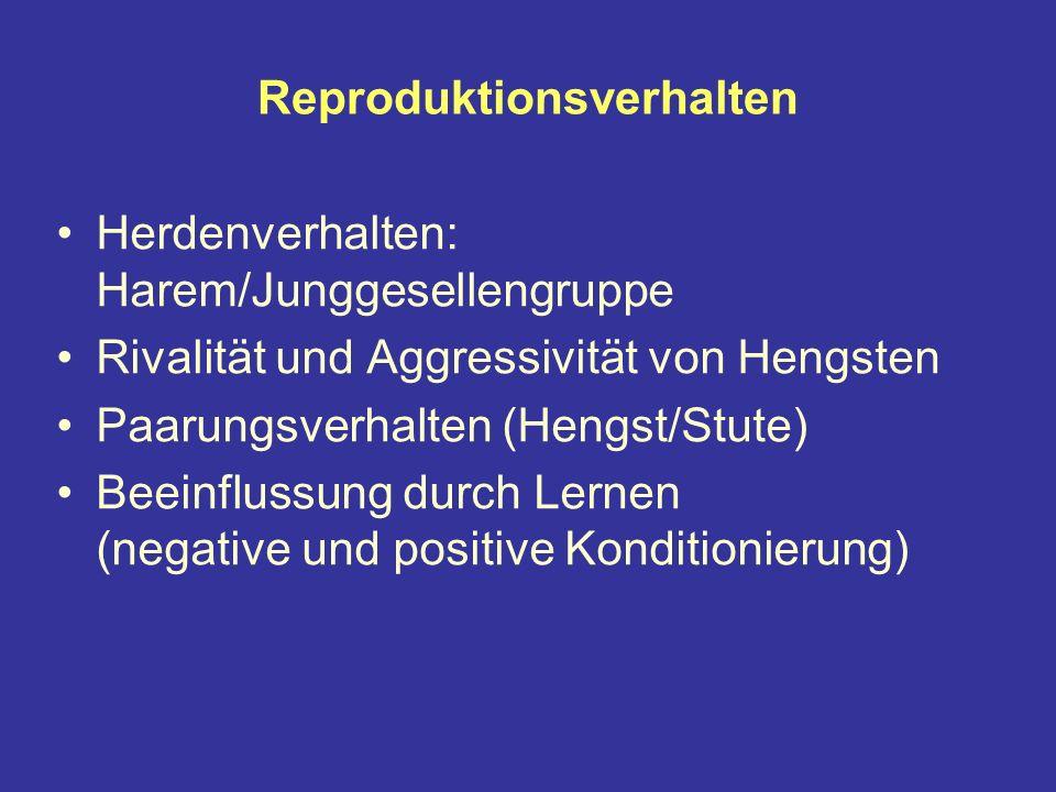 Reproduktionsverhalten Herdenverhalten: Harem/Junggesellengruppe Rivalität und Aggressivität von Hengsten Paarungsverhalten (Hengst/Stute) Beeinflussung durch Lernen (negative und positive Konditionierung)