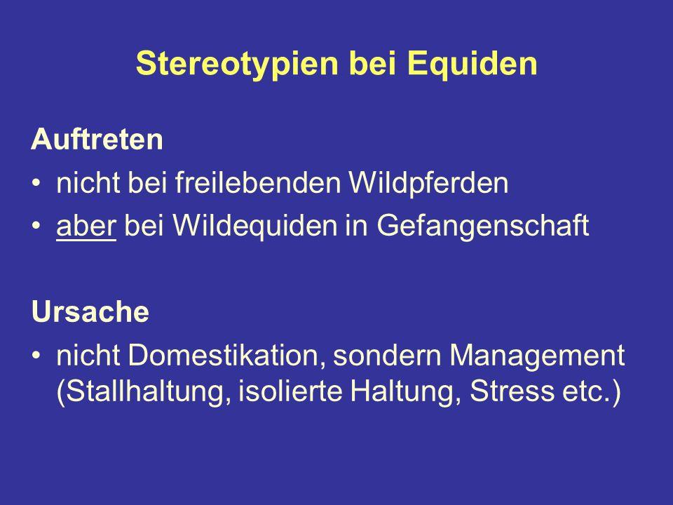 Stereotypien bei Equiden Auftreten nicht bei freilebenden Wildpferden aber bei Wildequiden in Gefangenschaft Ursache nicht Domestikation, sondern Management (Stallhaltung, isolierte Haltung, Stress etc.)