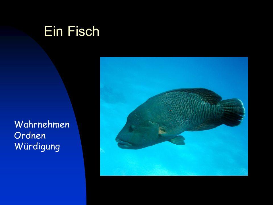 Ein Fisch Wahrnehmen Ordnen Würdigung