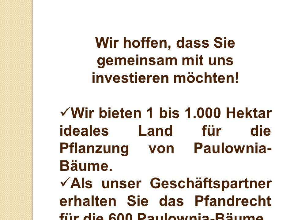 Wir hoffen, dass Sie gemeinsam mit uns investieren möchten! Wir bieten 1 bis 1.000 Hektar ideales Land für die Pflanzung von Paulownia- Bäume. Als uns