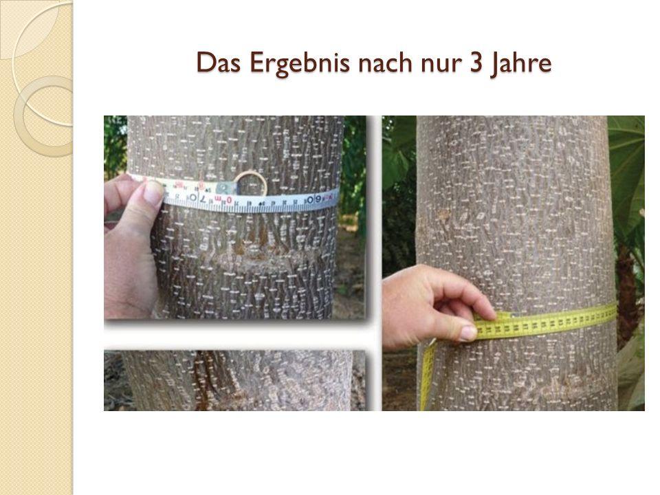 Die Verwendung von Paulownia Holz Wir empfehlen, die Paulownia- Bäume 9 Jahre wachsen zu lassen, um die optimale Produktion zu erreichen.
